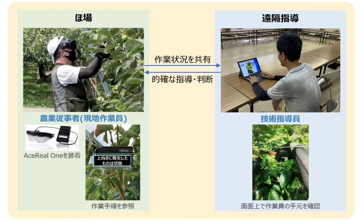 ドコモ、スマートグラスによる農業遠隔指導の実証実験を開始