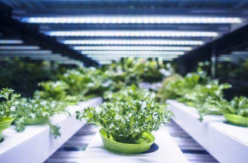 Amazonジェフ・ベゾス氏も注目!農業と食生活を一変させる「未来の農法」とは?