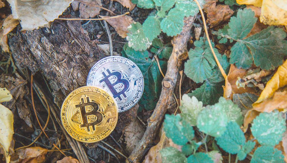 仮想通貨が「認定森林の支援」を拡大。ICOで国内森林のサポーターを増加させる試み