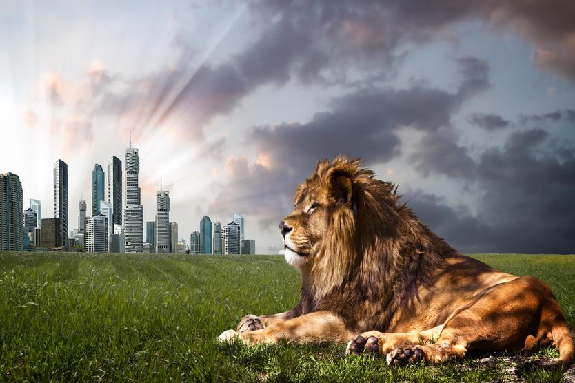 動物と来訪者をより幸せにする「未来の動物園像」とはーー動物園を再考する建築コンペの優秀作品に学ぶ