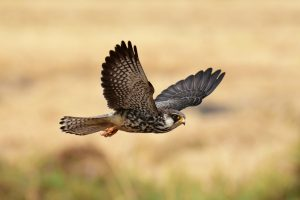 レーダーをすり抜ける鳥型ドローン、中国で開発加速