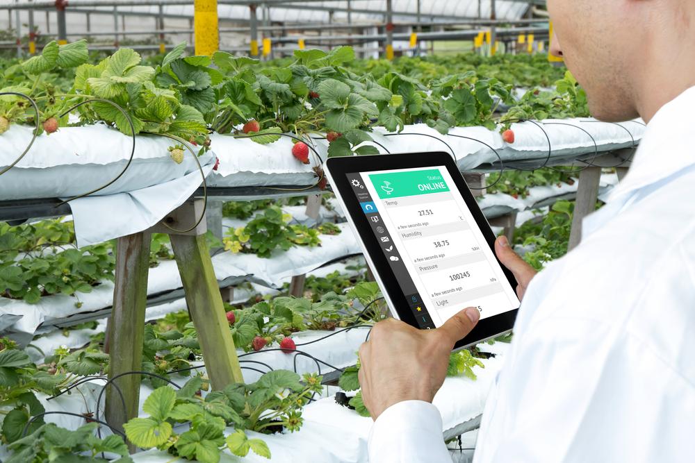 スマートファームは国産バジルの生産量をアップできるか。IoTによる遠隔地の生産管理を一元化
