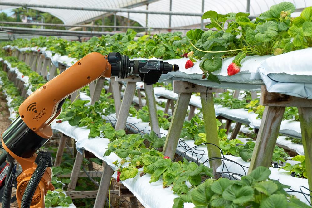 シンガポールに見る「未来の農業」、食糧危機を乗り切るハイテク化の最前線