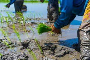 "SDGsの目標8「働きがいも経済成長も」を目指す""ユニバーサル農業""とは"